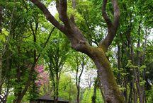 İstanbul Emirgan Park