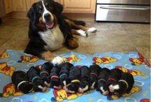 ANIMALS - FAMILIES
