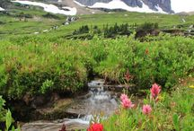 Floral / Blooms to look for in Glacier National Park and St. Mary Montana / by St. Mary - Glacier Park KOA