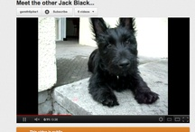 SOUTH AFRICAN SCOTTIES / This here is a place for Scottie owners in Cape Town and South Africa to shake paws. We have two Scotties - Jack Black, aged 4, and Molly, 3. Scotties' personalities exceed their small size. Their love is boundless. Their ears turn 370 degrees. Their hatred for 'rodents' (ie squirrels) is irrational. Their fur is ...everywhere.
