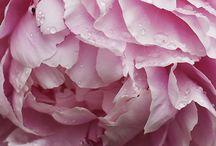 •floral