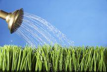Garden Tips DIY