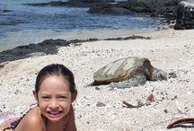 Hawaii Vacation Ideas