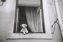 Pets in Windows / by Vanessa Knijn