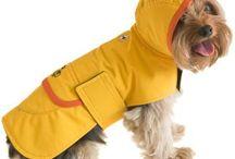 Ropita y accesorio para perros