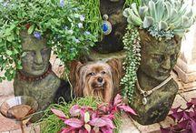 Idéias para o Jardim