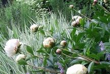 kombinace rostlin