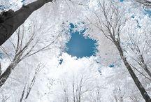 Snowy Wonder