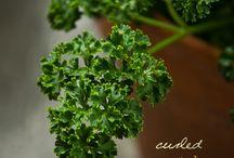 Herb garden / by Lisa