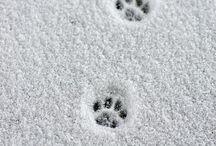 silky paws