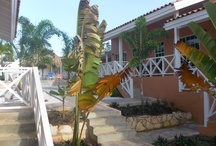 The holiday apartments / Holiday resort Curinjo Curacao, the 2 and 3 room holiday apartments