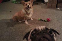 PHOTO BOMB DOGS & PETS