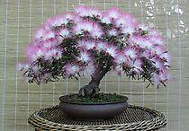 bonsai / by Imelda Sasim