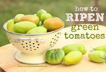 Vegetables / Vegetable recipes and preservation methods