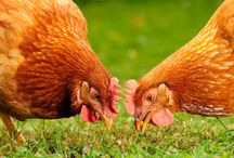 Homesteading / Gardening, raising chickens, etc.  Anything that has to do with homesteading.