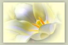 bílý kytky