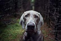 De PeRRos ! / info sobre perris
