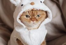 Costumes for cats