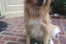 Dog toys / Dog Toys: DIY DOG TOYS