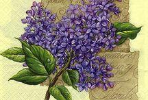 Lavanda, violetas y lilas
