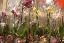 Orkidelerim bakımı