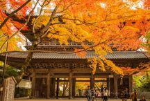 Autumn Buzz in Shiga-ken, Japan.