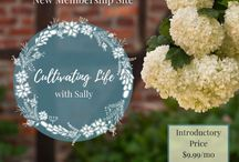 Cultivating Life with Sally / All about the new membership site for on-going mentoring from Sally Clarkson for Christian moms