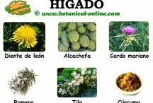 Plantas para hígado