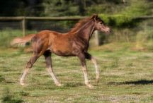 Equine Photography / Photographs of everything Thoroughbred