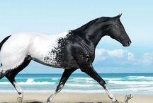 dream ponies