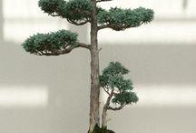 Tree.Bonsai