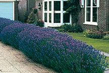 Beautiful Landscaping / Landscaping ideas for the home