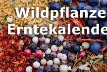 Wildpfanzen