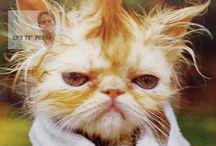 Biglietti Compleanno Gatti