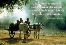วิถีชีวิต Life / ศิลปะ วัฒนธรรม และการดำรงชีพของแต่ละชุมชน Way of life in Northeast Thailand