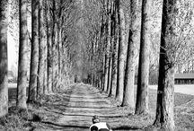 Paris Roubaix / Bike