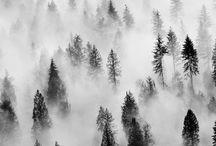 Fog, tåke,,,