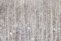 Winter Woods / A collection of Fine Art inspired by the stillness of the forest in Winter.