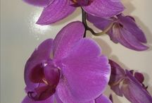orchid / orchids we have or I love