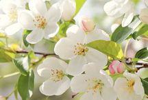 Blomster/Flower