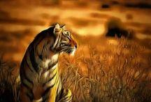 Tigers bengal
