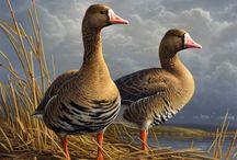 Av Kuşları