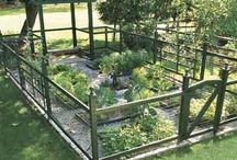 Vegetable garden & herbs