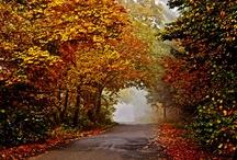 Fall / by Cindy Nix