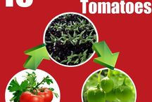DIY Gardening Tips / Start today with gardening ideas for your organic and vegetable gardens including tips