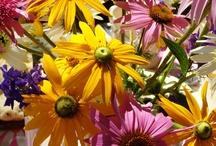 Gardening and Porch / by Jeannie Keener
