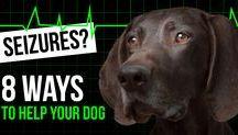 Natural Remedies Pets