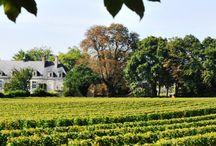 Château de Varrains / En plein AOC Saumur Champigny, le Château de Varrains nous raconte deux siècles d'histoire du vin et du « champagne ». Plongez dans l'histoire de cette Maison saumuroise et découvrez un Saumur Champigny, souple et velouté, aux notes aromatiques de violette et d'iris. Le Château de Varrains, la rencontre d'un vin d'aujourd'hui avec le patrimoine du XVIIIè siècle.