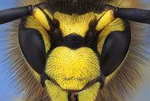 Insekten MAKRO Photo
