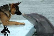 owczarek i delfi